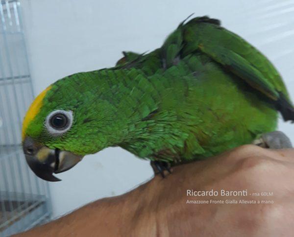 allevamento-amazzoni