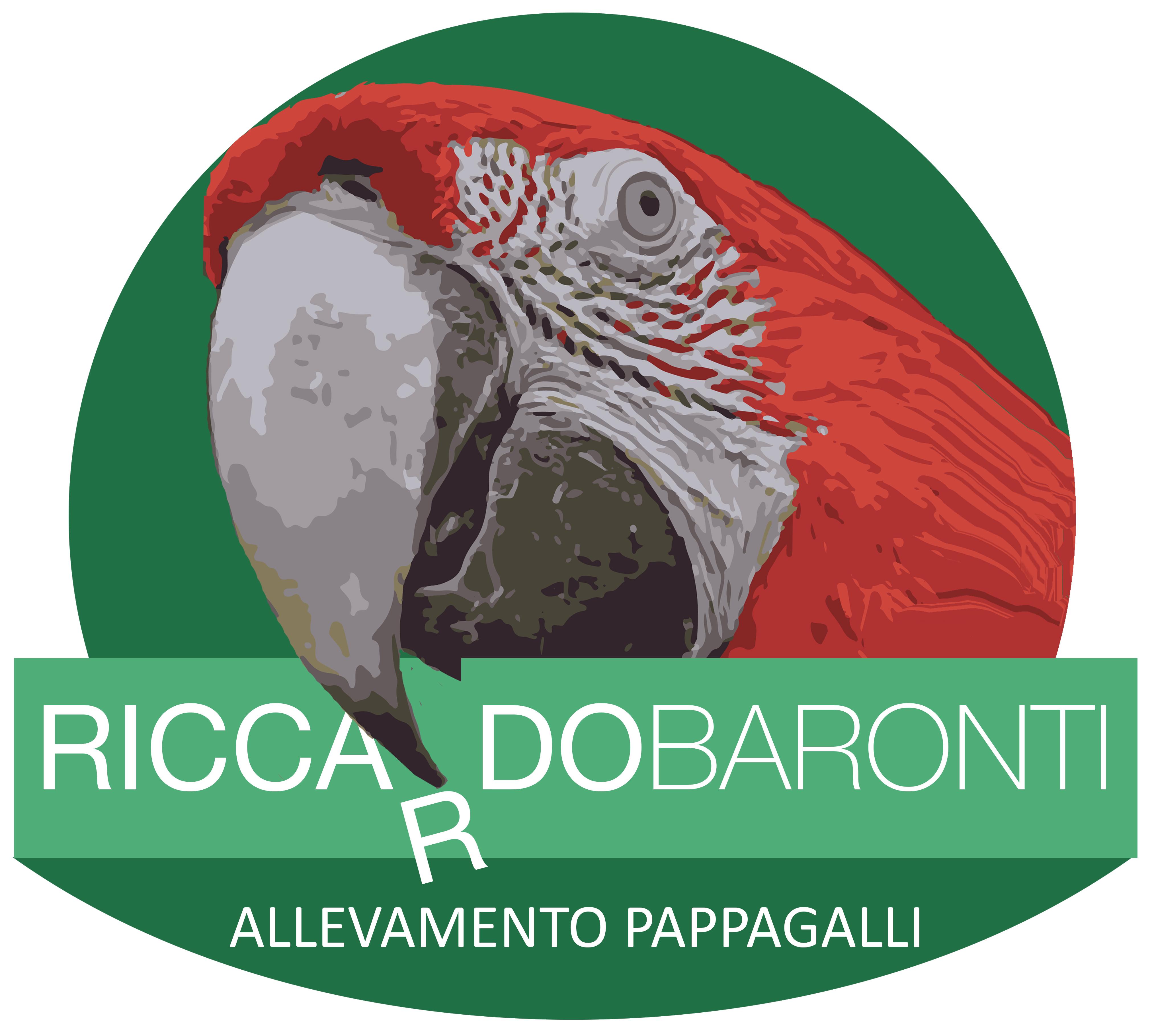 Allevamento Pappagalli Firenze | Riccardo Baronti